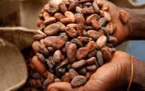 История появления шоколада (кто придумал и где его родина)