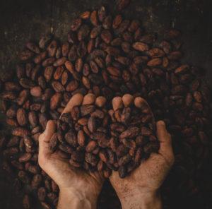 Какао бобы как выглядят