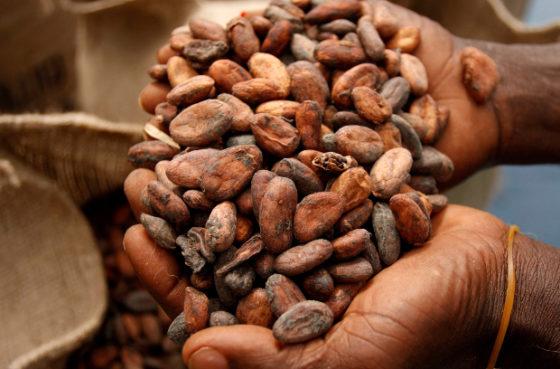 Какао бобы для производства шоколада