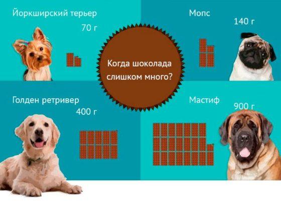 почему собакам нельзя шоколад